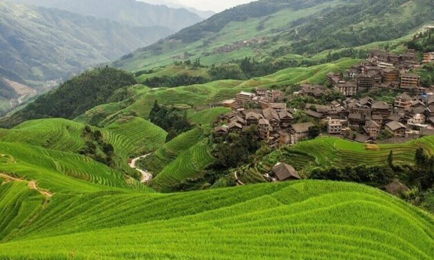 Longji Rice Terraces – a guide for tourists