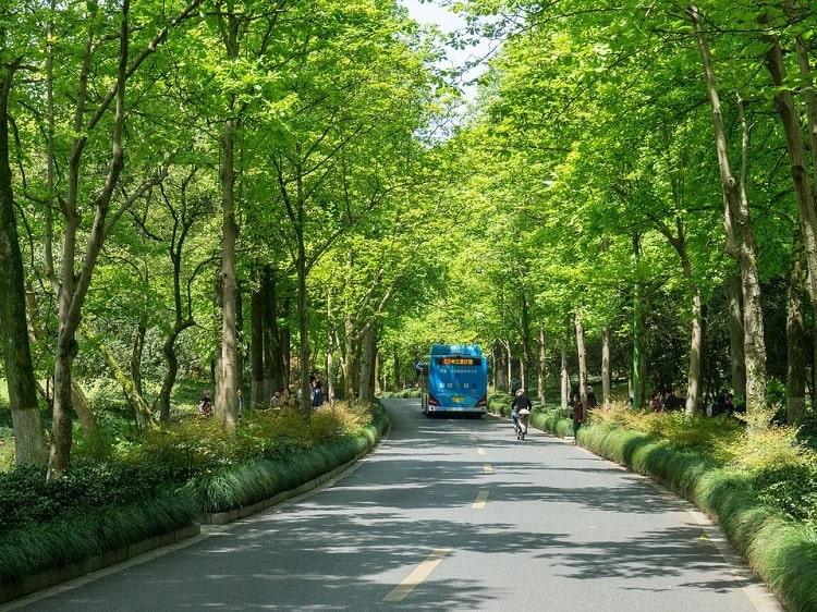 Shady street in Hangzhou Zhejiang