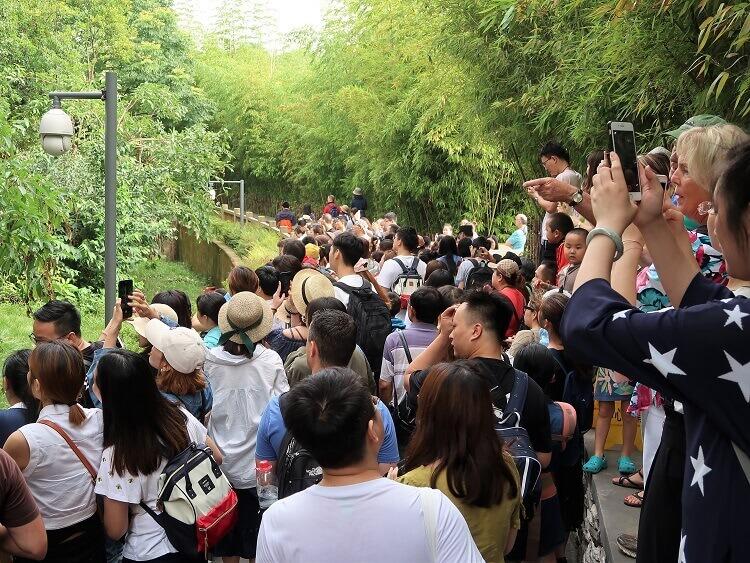 Crowds at Chengdu Panda Base